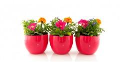 Горщики для квітів